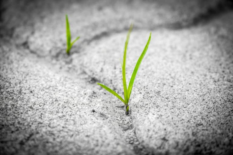 Grass Growing in the Pavement