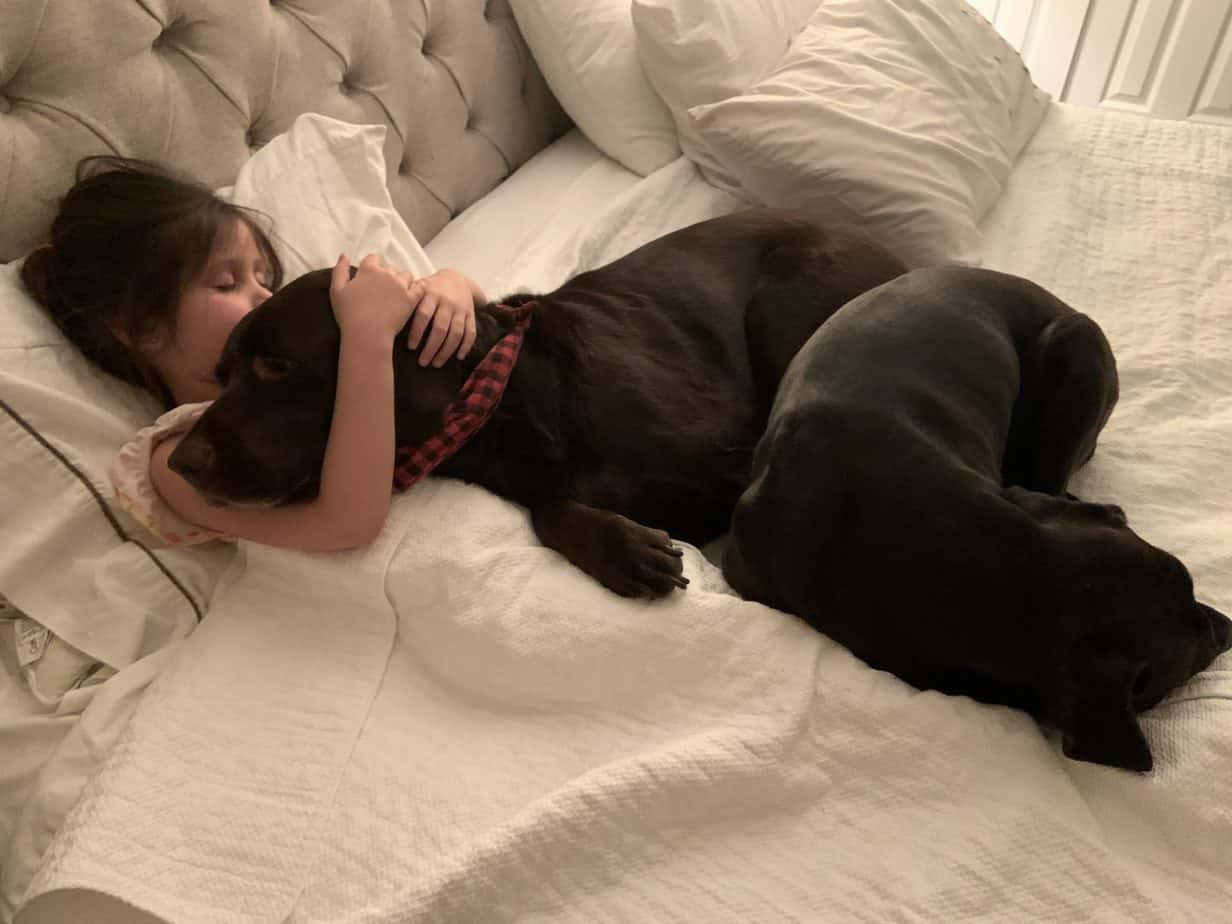 Self Care Tips Little Girl Sleeping With Two Dogs